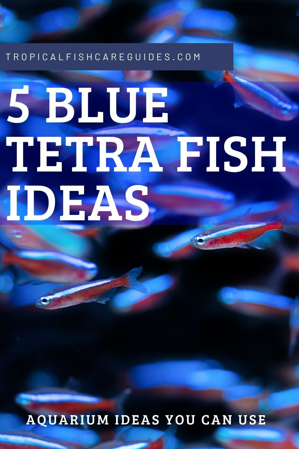 List Blue Tetra Fish Ideas for Your Aquarium