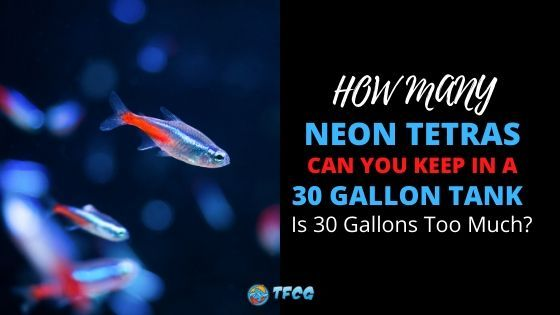 Neon Tetras In A 30 gallon Tank