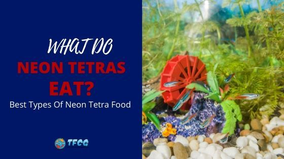 What Can You Feed Neon Tetras