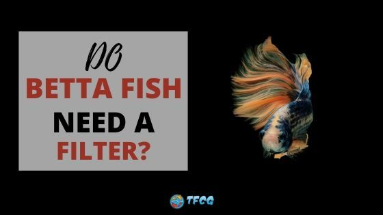 Betta Fish And Filters