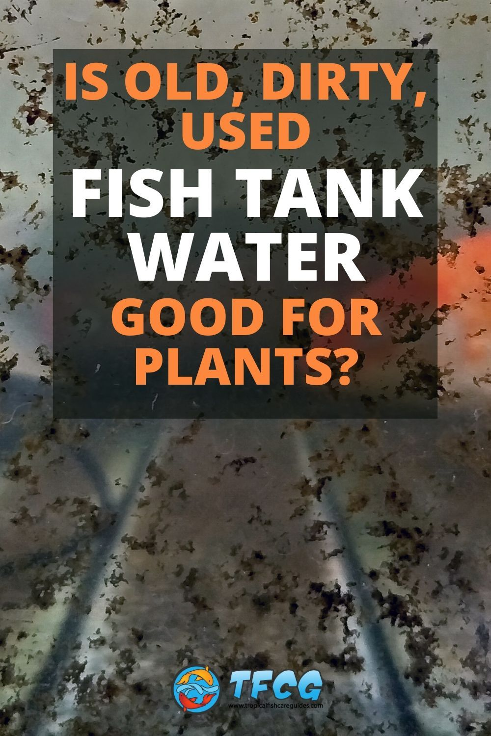 Is Old Fish Tank Water Good For Plants_
