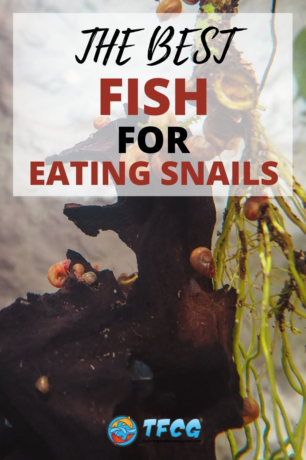 The Best Fish For Eating Snails