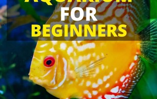 How to cycle your aquarium