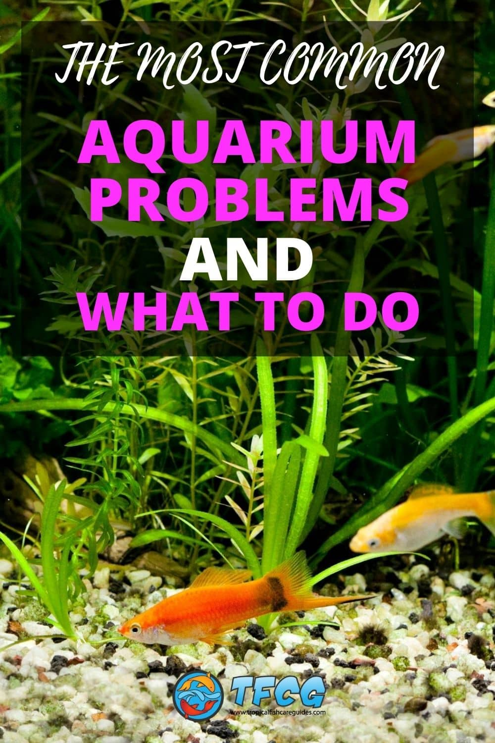 Most Common Aquarium Problems & Issues To Watch Out For