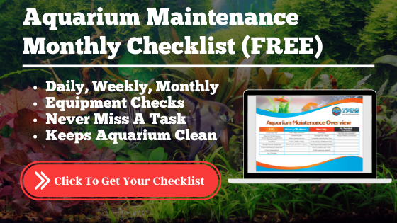 Aquarium Maintenance Checklist [Free Guide]