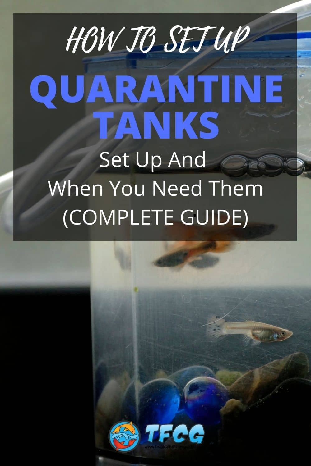 Quarantine Tanks - Set Up And When You Need Them (Complete Guide)