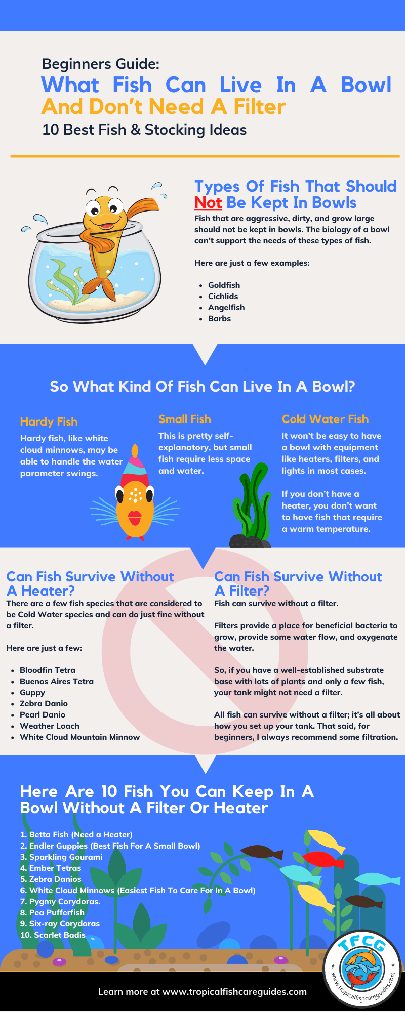 Infographic Of What Fish Can Live In A Bowl And Don't Need A Filter (10 Best Fish)