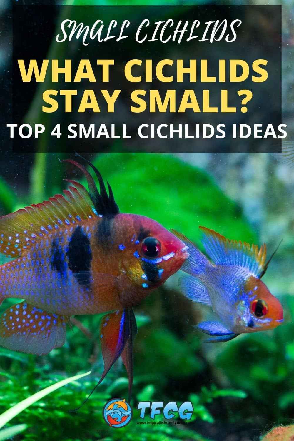 What Cichlids Stay Small