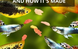 What Is Fish Food Made Of