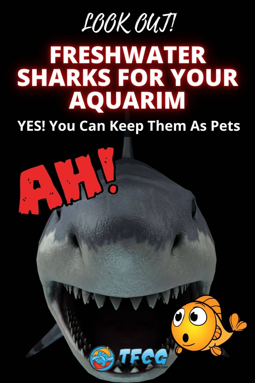Freshwater Sharks For Your Aquarium You Can Keep As Pets