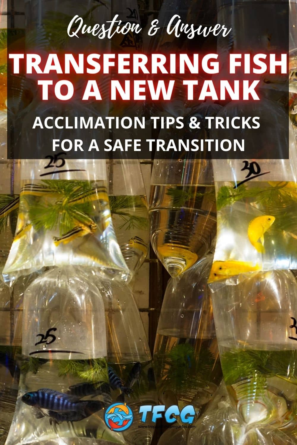 Best Way To Transfer & Introduce Fish To New & Established Tanks