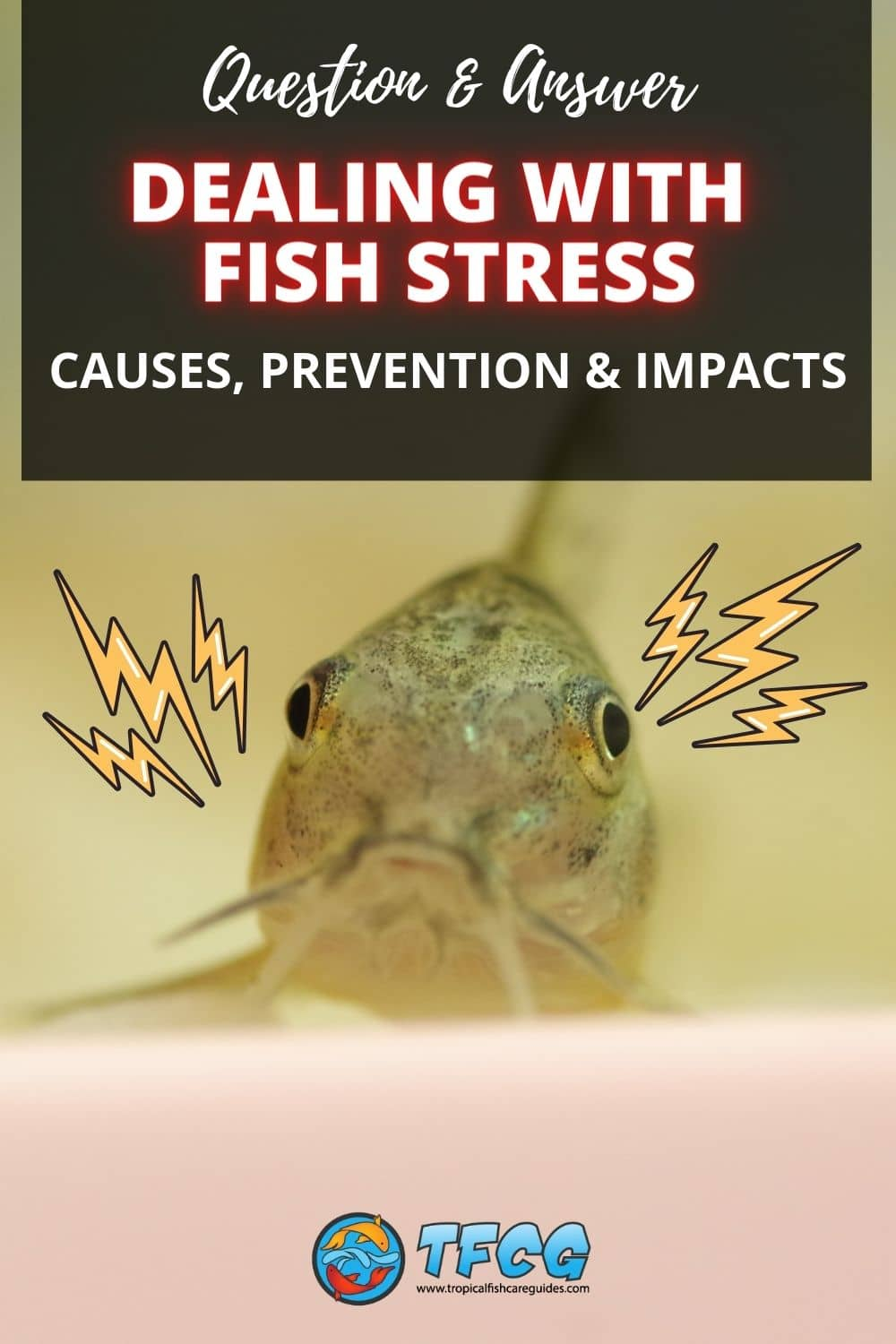 Dealing With Stressed Fish In A New Tank - Causes, Prevention & Impacts