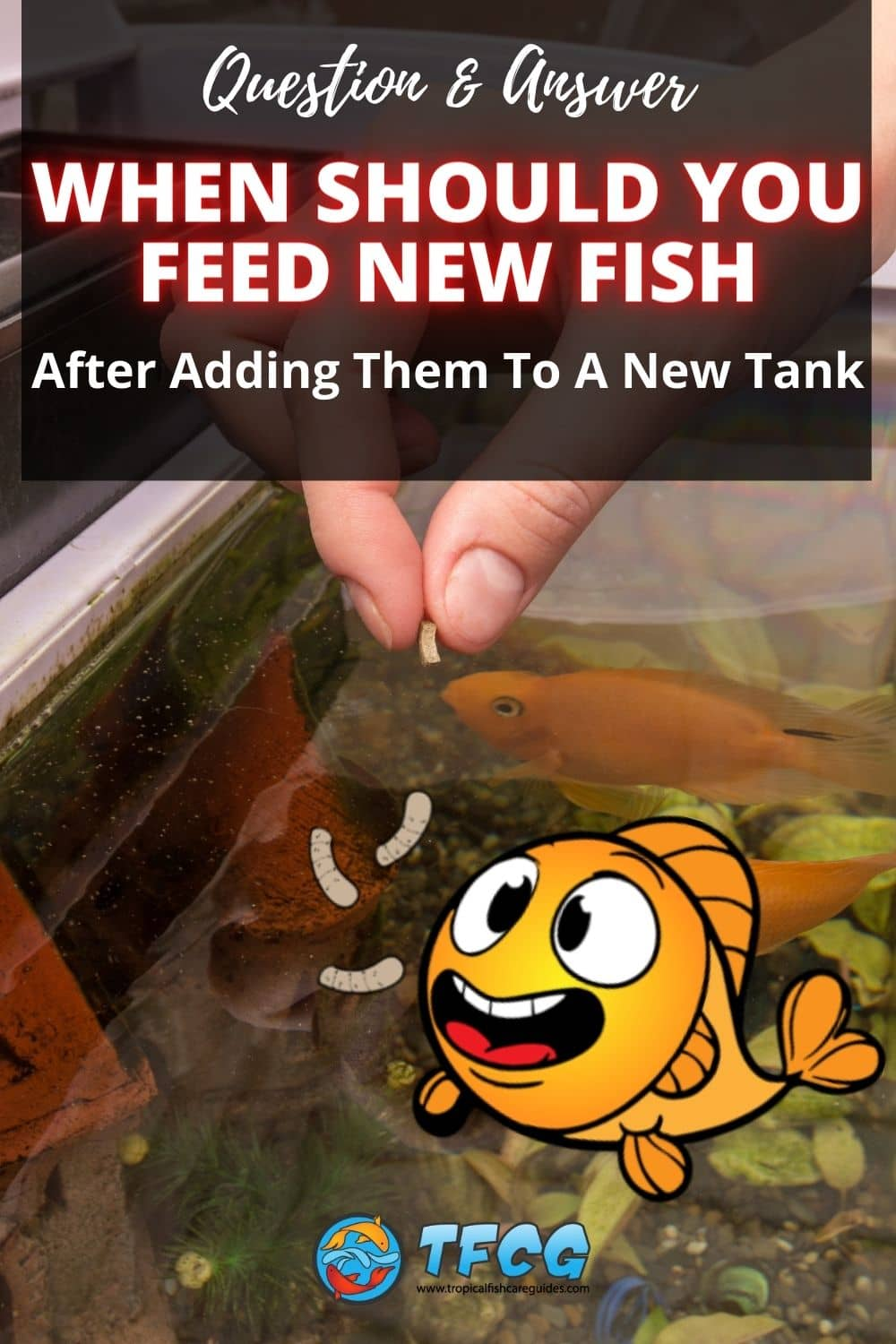 When Should You Feed Your Fish After Adding Them To A New Tank