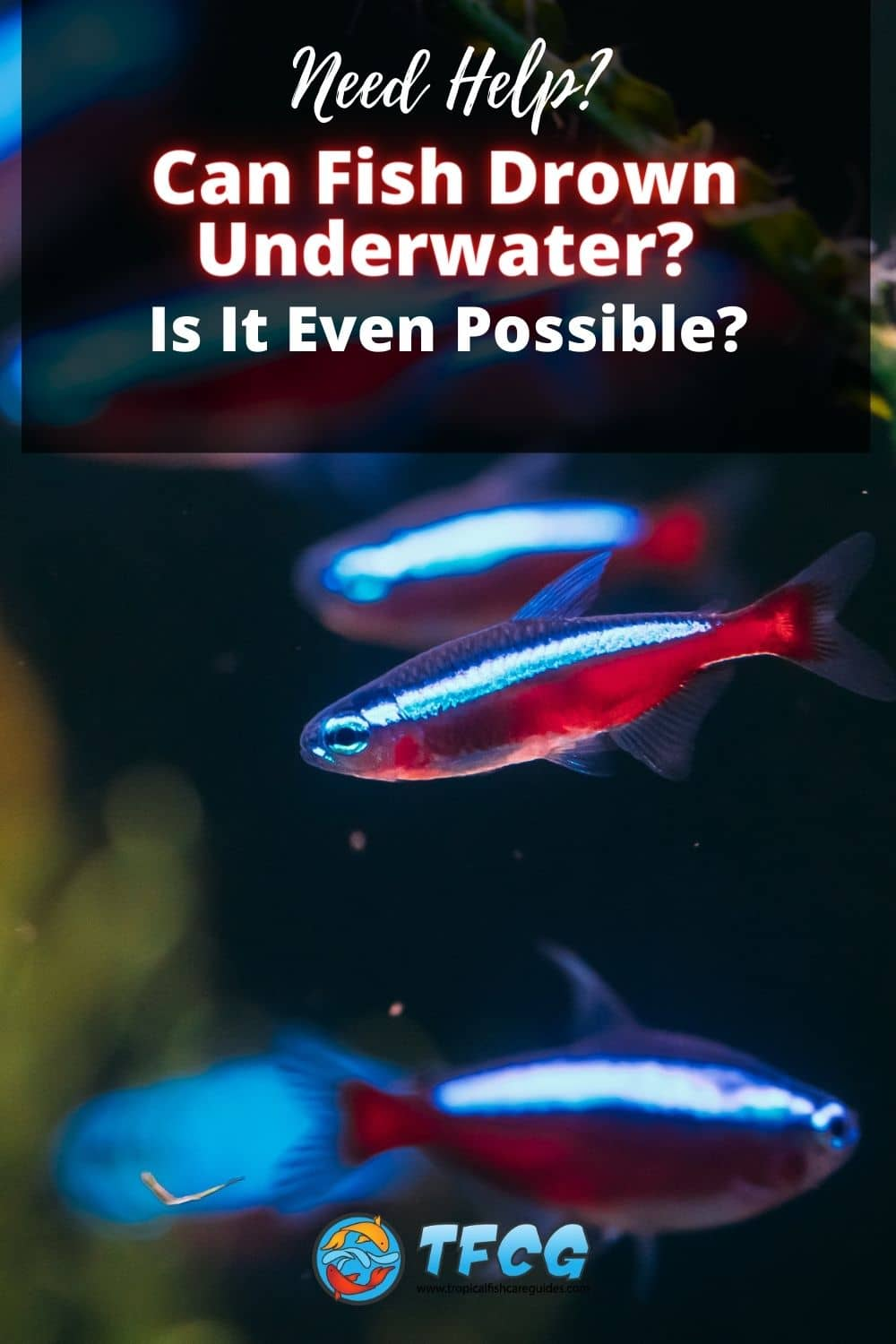 Can Fish Drown Underwater