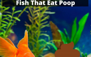 How To Clean Fish Poop And Fish That Eat It