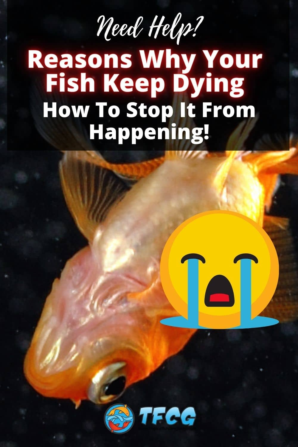 Reasons Why Your Fish Keep Dying & How To Stop It From Happening!