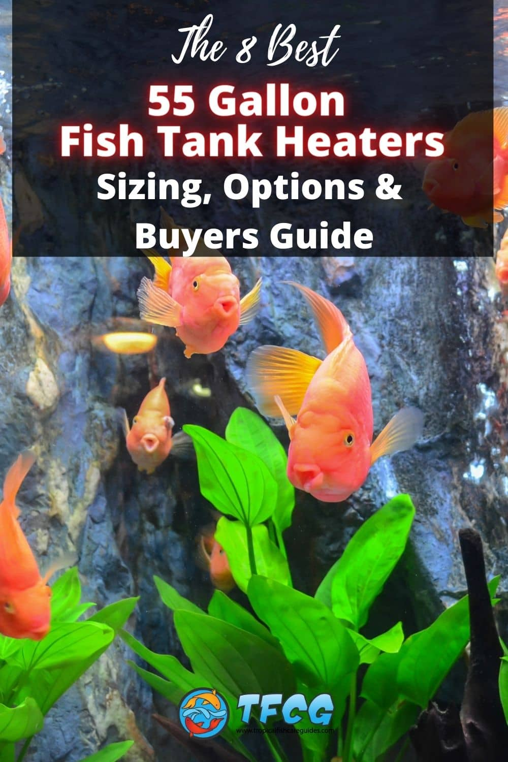 The Best 55 Gallon Fish Tank Heaters [Reviewed]
