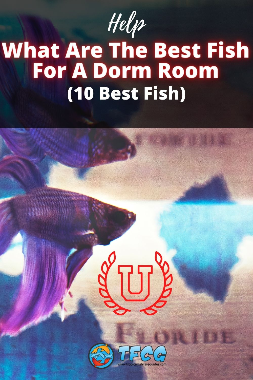 Fish For A Dorm Room