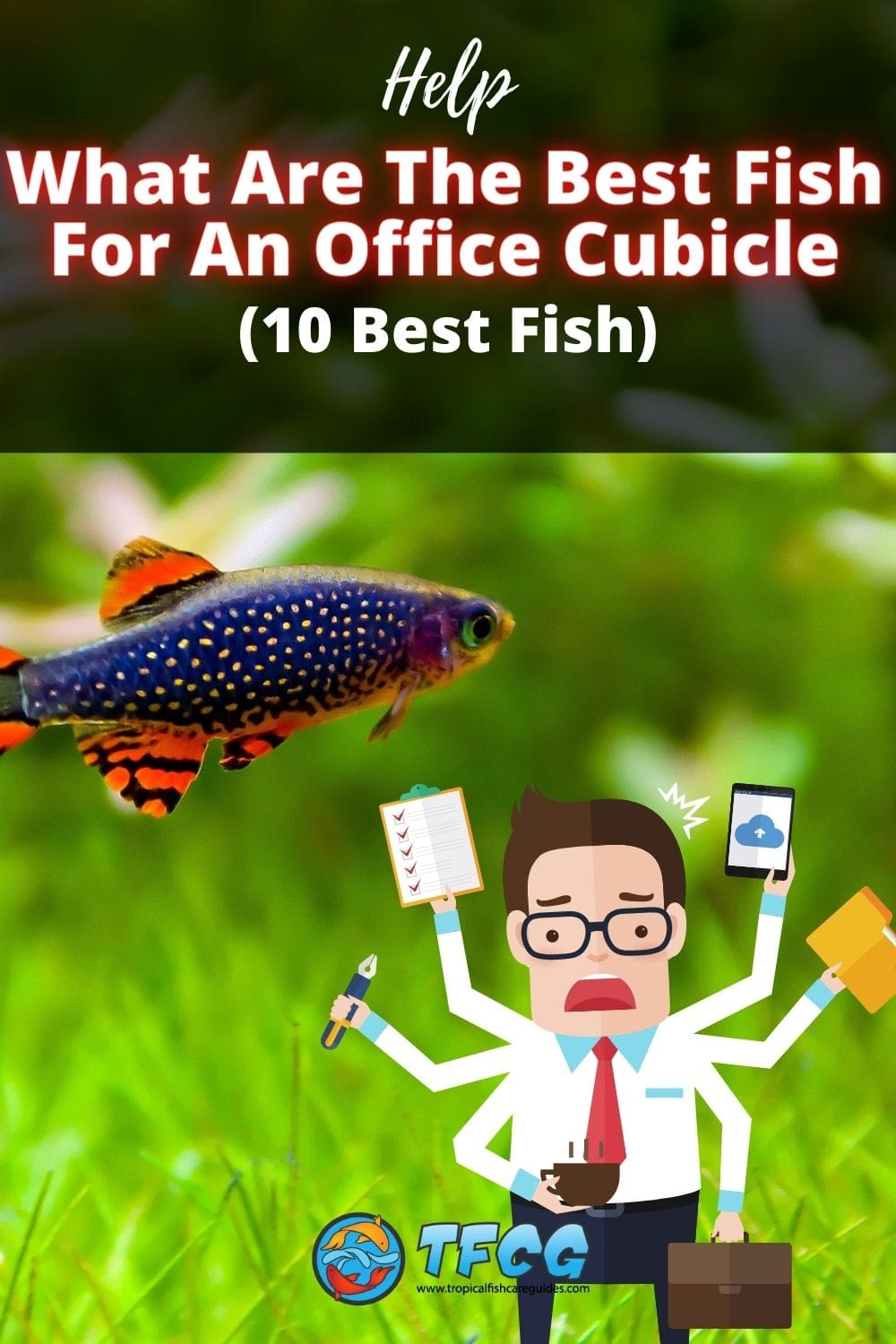 Fish For A Office