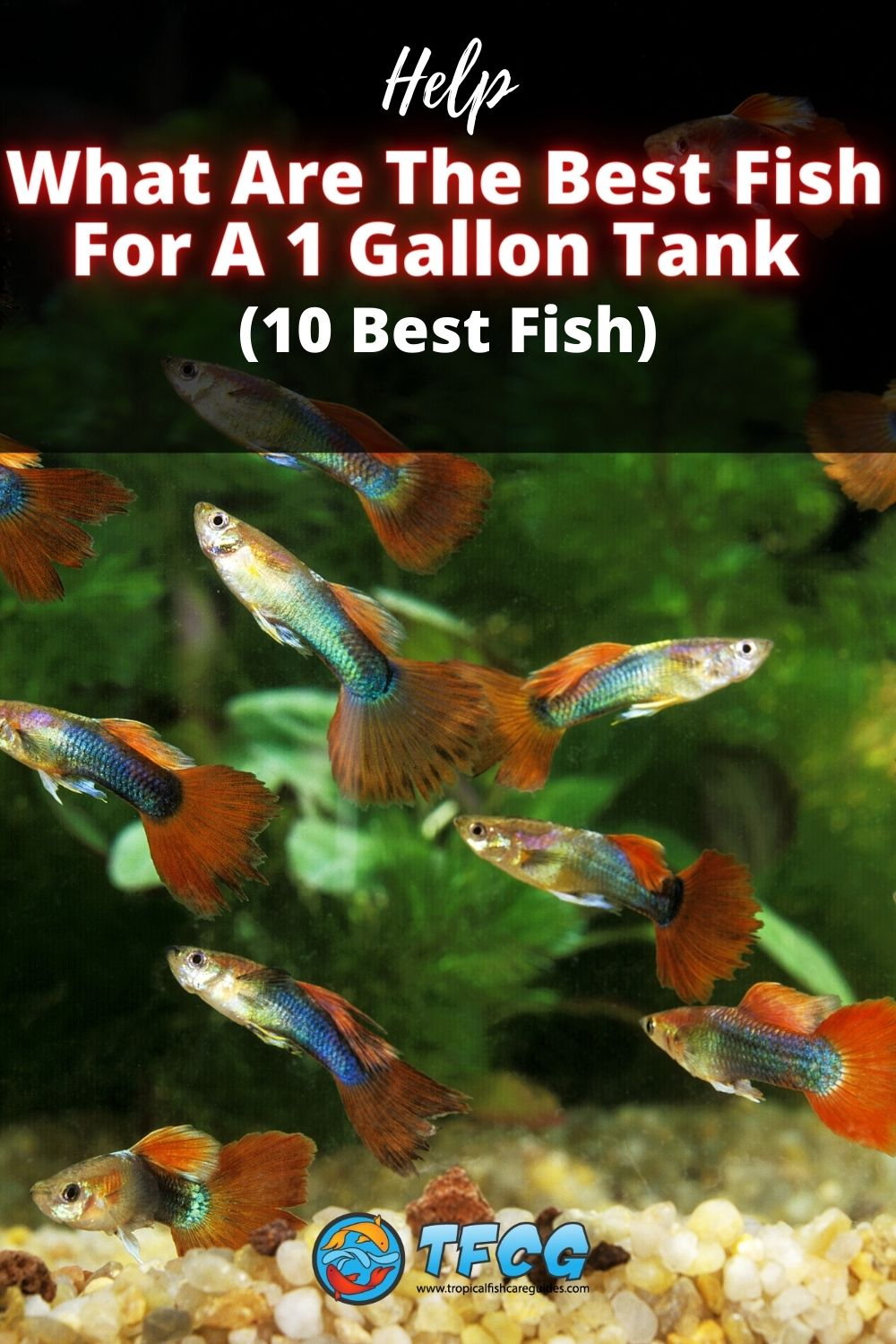 Fish For A One Gallon Tank-min